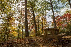 family-picnic-area