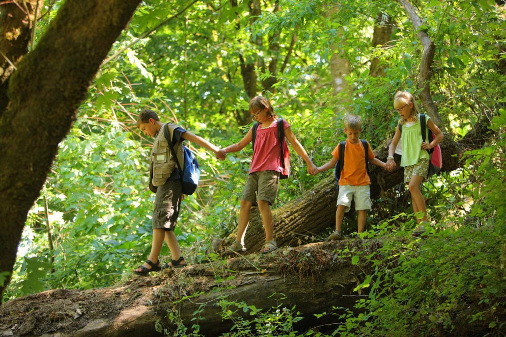 Western Nc Summer Camp Guide Pilot Cove Pisgah Forest Nc