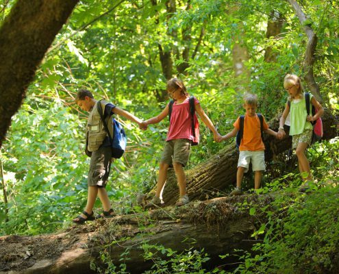 Group of kids in forest walking