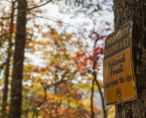 tree sign in pisgah forest
