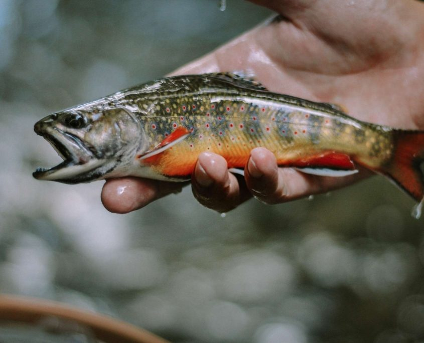 Fly Fishing near Pilot Cove and Brevard NC! | Pilot Cove