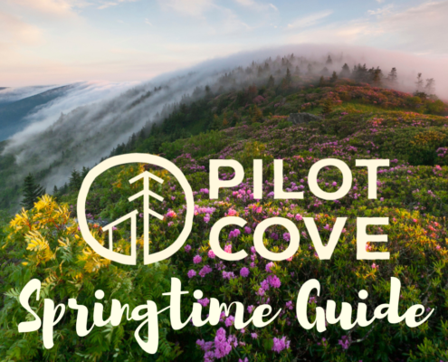 Spring Guide to Pisgah National Forest